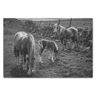 馬および子馬のティッシュペーパー 薄葉紙