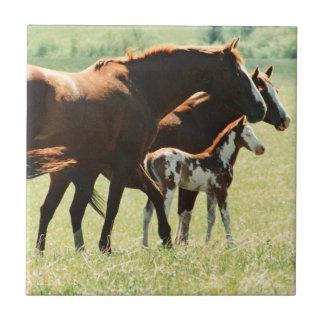 馬および子馬の写真 タイル
