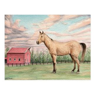 馬および赤い納屋Postacard ポストカード