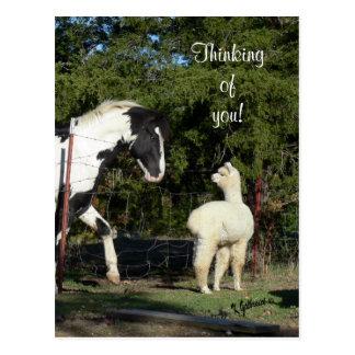 馬のアルパカの郵便はがき ポストカード