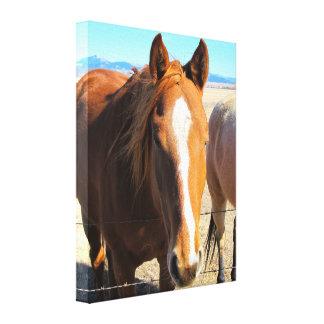 馬のキャンバスプリント キャンバスプリント
