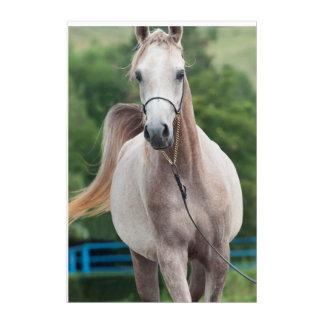 馬のコレクション。 アラビアの灰色 アクリルウォールアート