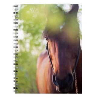 馬のコレクション。 春 ノートブック