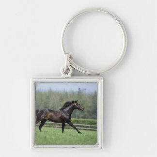 馬のサラブレッド、Wassl 1988年、 キーホルダー