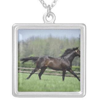 馬のサラブレッド、Wassl 1988年、 シルバープレートネックレス