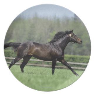 馬のサラブレッド、Wassl 1988年、 プレート
