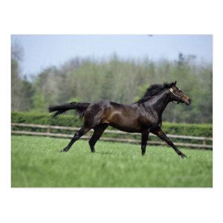 馬のサラブレッド、Wassl 1988年、 ポストカード