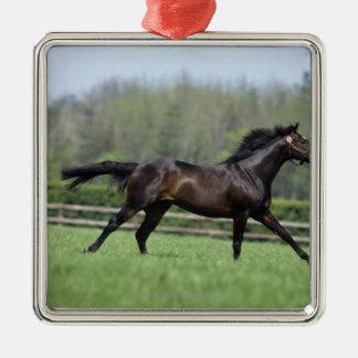 馬のサラブレッド、Wassl 1988年、 メタルオーナメント