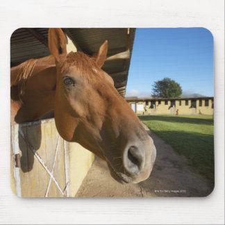 馬のポートレート、スワジランド、南アフリカ共和国 マウスパッド