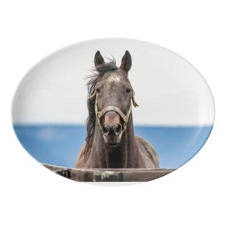 馬のポートレート 磁器大皿