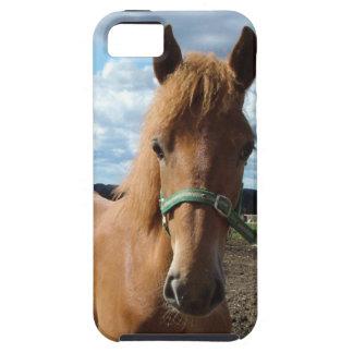 馬の写真のiPhone 5の穹窖 iPhone SE/5/5s ケース