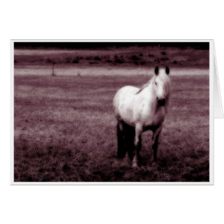馬の挨拶状 カード