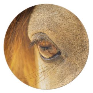 馬の目 プレート