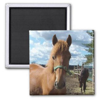 馬の磁石 マグネット