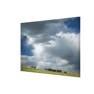 馬の群れを動かしているカウボーイ キャンバスプリント