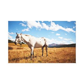 馬の群れ|の動物の写真撮影 キャンバスプリント