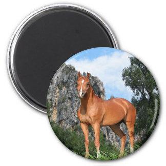 馬の芸術 マグネット