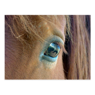 馬の視野 ポストカード