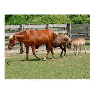 馬の郵便はがき ポストカード