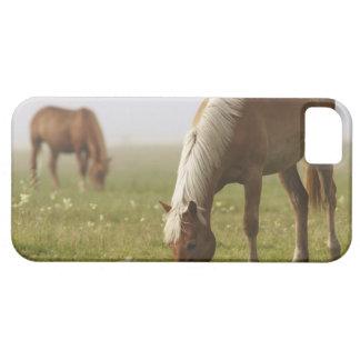 馬の野生の花草原の朝の霧のピアノ iPhone SE/5/5s ケース