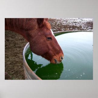 馬の飲むこと ポスター
