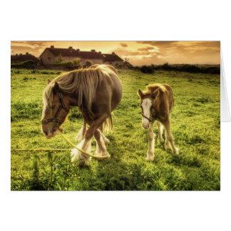 馬は生み出し、産みます カード