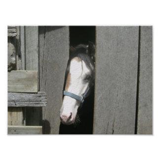 馬をかいま見ること フォトプリント