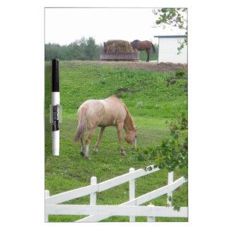 馬を牧草を食べること ホワイトボード