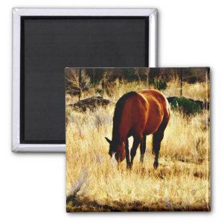 馬を牧草を食べること マグネット