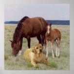 馬ポスターを持つラブラドル・レトリーバー犬 ポスター