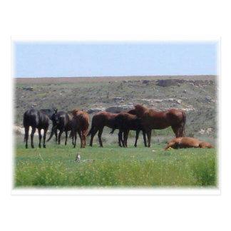 馬及びプレーリードッグ-ローガン郡KSの群れ ポストカード