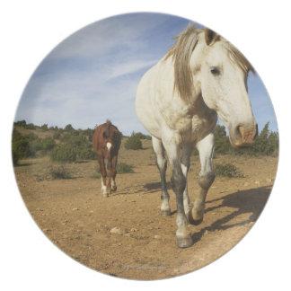馬、オード、ラングドックルーシヨン、フランス プレート
