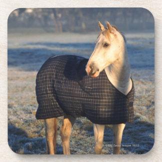 馬 コースター