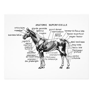馬 チラシ