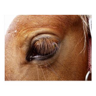 馬/子馬の目の終わりの-馬の写真撮影 ポストカード