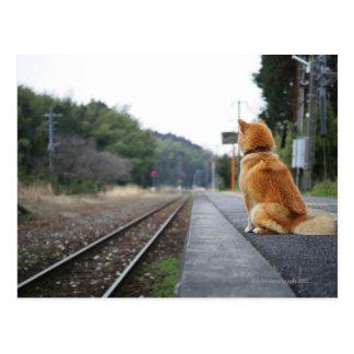 駅に坐っている犬 ポストカード