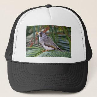 騒々しい抗夫の鳥、アデレード、オーストラリア キャップ