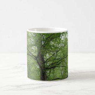 驚異の木 マジックマグカップ