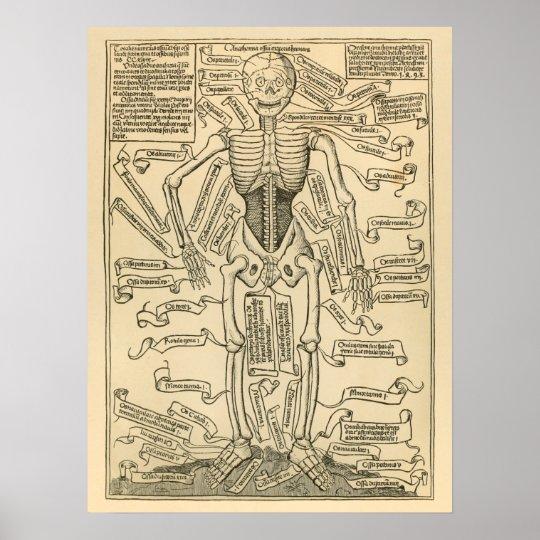 骨組ヴィンテージの骨のドイツの解剖学のプリント ポスター