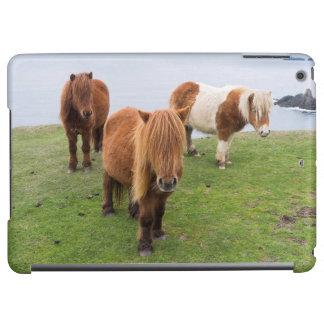 高い崖の近くの牧草地のシェトランド諸島子馬