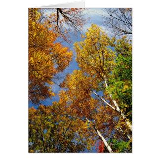 、高い木空に達します、空白のなメッセージカード カード