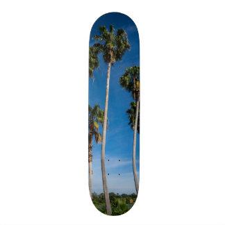 高い湾曲のやし スケートボード