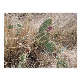 高い砂漠のサボテン ポストカード