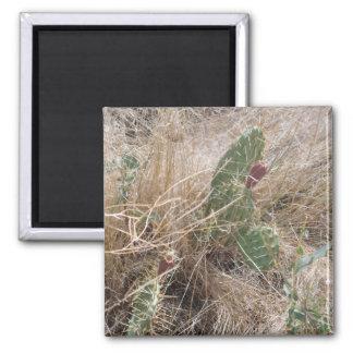 高い砂漠のサボテン マグネット