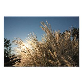 高い草および日没 フォトプリント