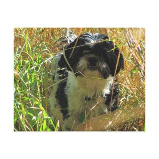 高い草のシーズー(犬)のTzuのライオン犬 キャンバスプリント