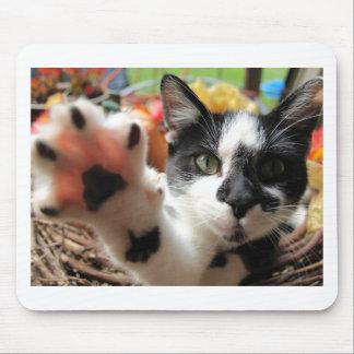"""""""高い5""""かわいい子猫猫の写真のmousepad マウスパッド"""