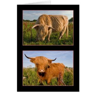 高地の牛 カード