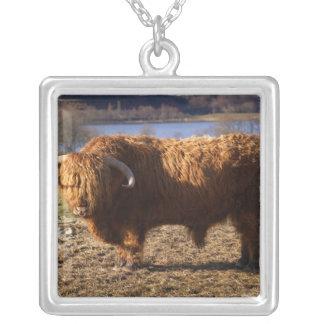 高地の牛Bull、スコットランド シルバープレートネックレス
