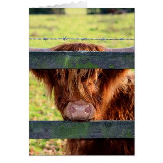 高地牛 カード